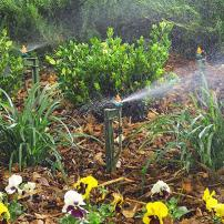 Drip irrigation system with microsprayers and ferns on mulch